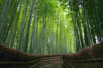 CNNが選んだ「日本のもっとも美しい場所」31選